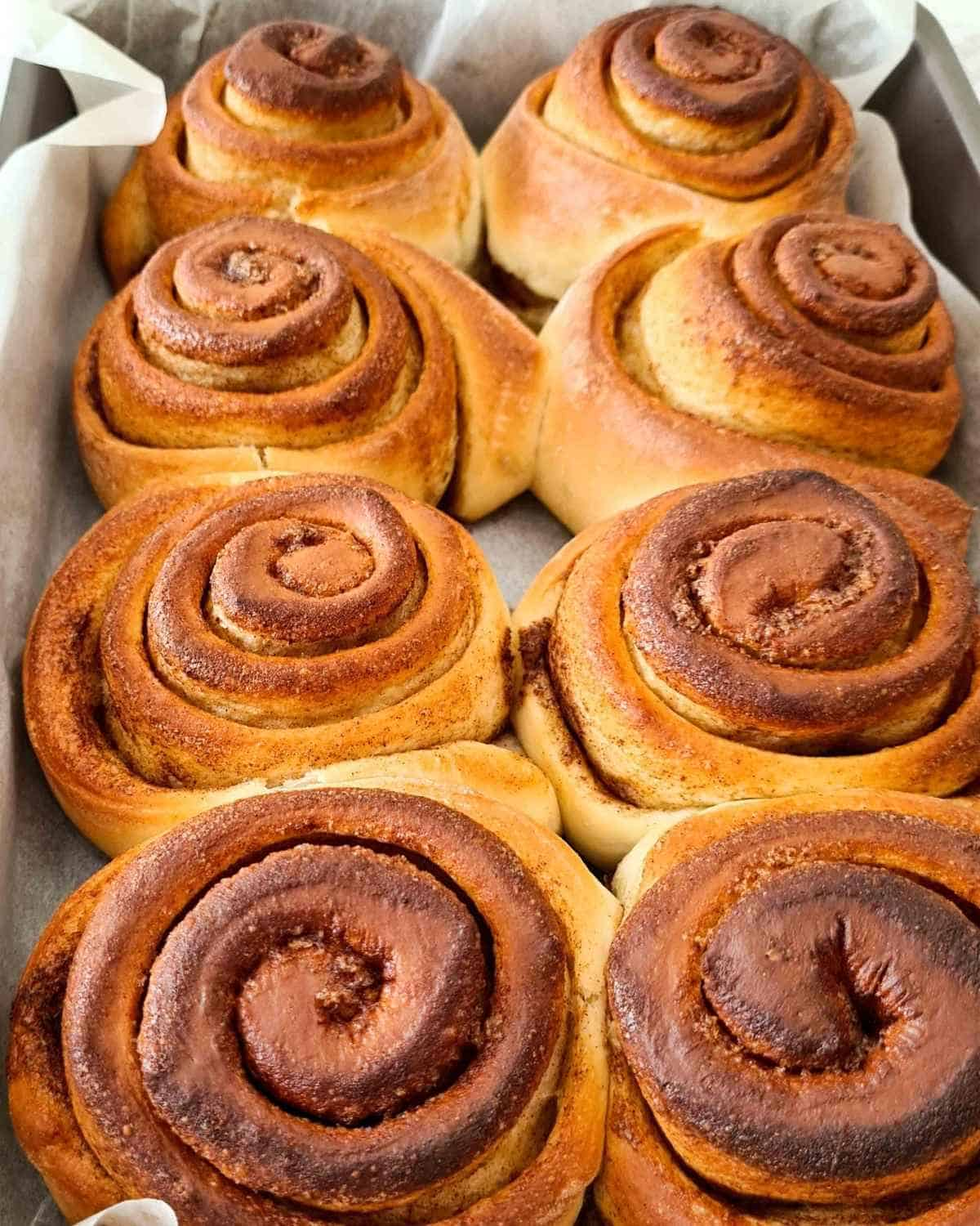 A tray of baked cinnamon rolls ready to be spread with chocolate icing