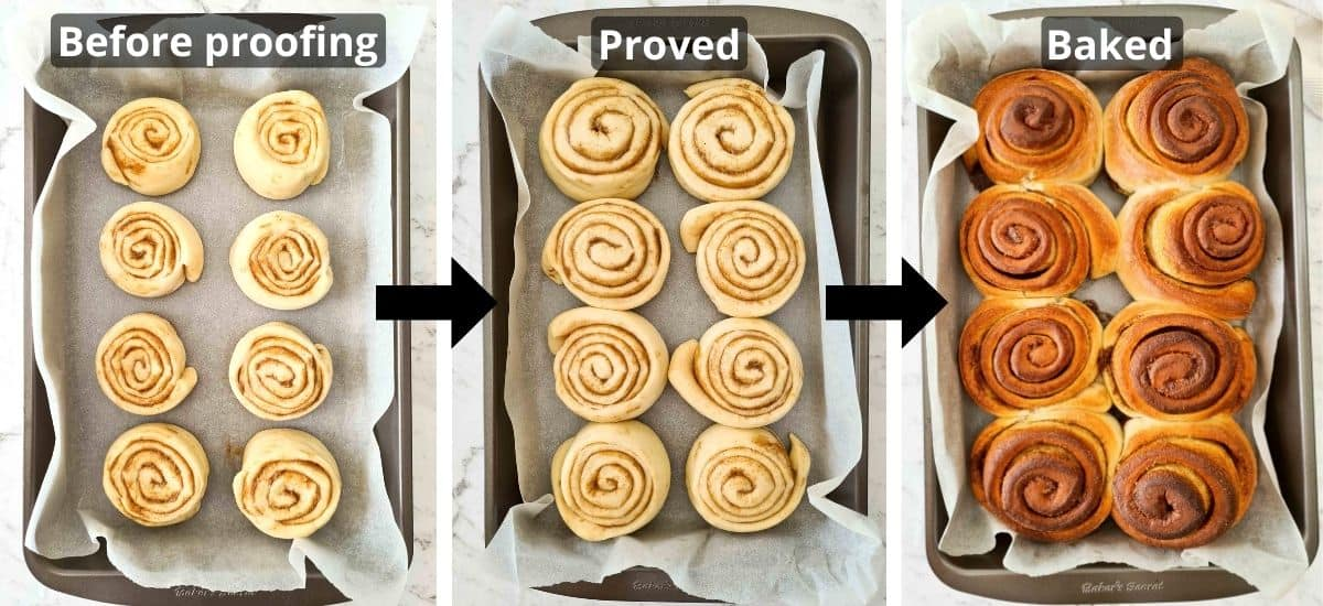 Process shots of a tray of cinnamon rolls from before proofing, to proved and then baked.